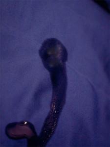 Пятно из подсолнечного масла на ткани полиэстер